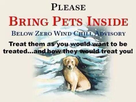 Bring Dogs Inside