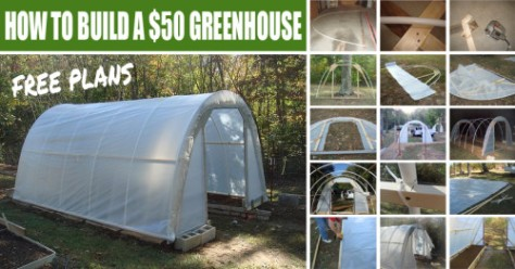 how-to-build-a-greenhouse-for-50-e1389930655318